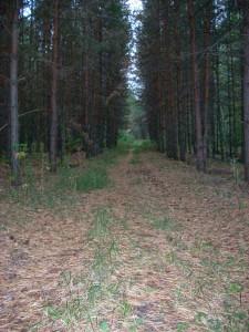 Еманжелинский лес